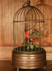 MMM Singvogel Vogel rot